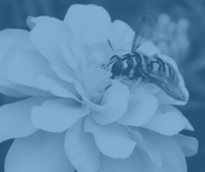 How to Avoid Bee Stings?